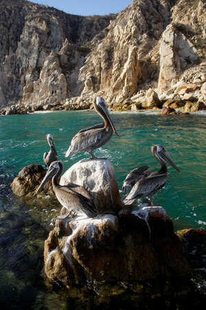 birds in Los Cabos, Baja California Sur, Mexico