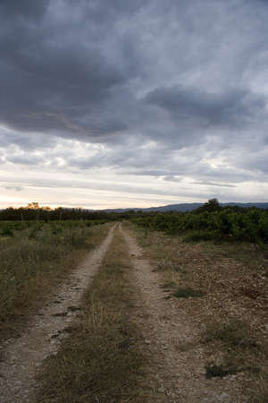 vaucluse: Landscape in Vaucluse, Provence, France