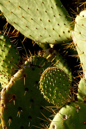 tourisms: detail of cactus in the desert of Mexico