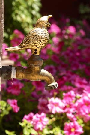 a nice detail in a mexican garden Stock Photo - 4800613
