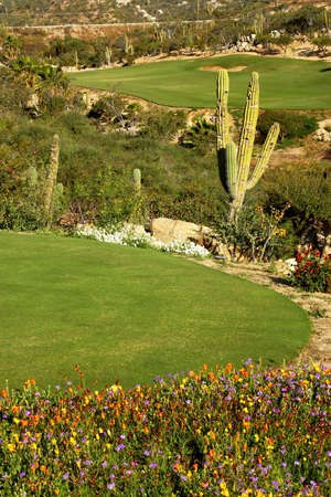 golf course in Los Cabos in Mexico Stock Photo - 4993177