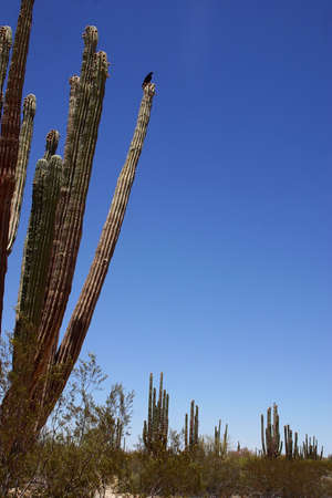 detain: desert detain in Baja California, Mexico