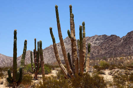 detener el desierto de Baja California, México