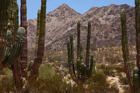 nonexistent: desert detain in Baja California, Mexico