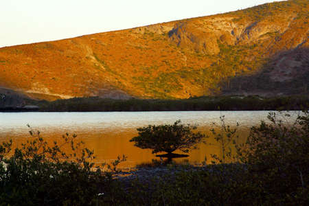 tourisms: Balandra beach, near of La Paz, Baja California Sur, Mexico