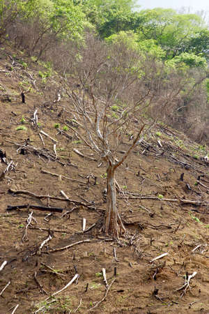 unstoppable: deforestation in the forest of Mexico Stock Photo