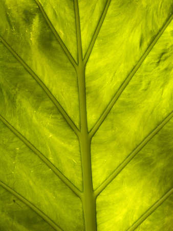 evocative: plant detail in a nature reserve in Mexico