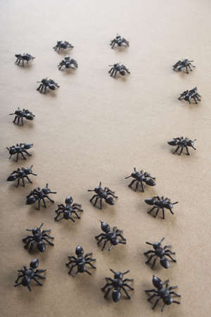 ants in a moment of organization Stock Photo - 5783233