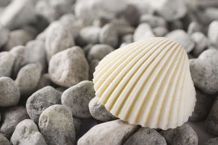 shell detail at the beach in summer time photo