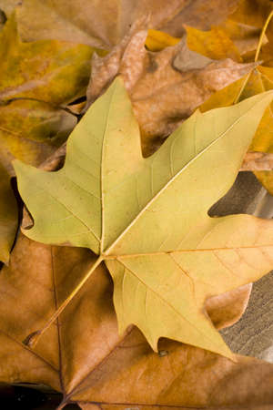 evocative: autumn details. ideal for decorate the home or office Stock Photo