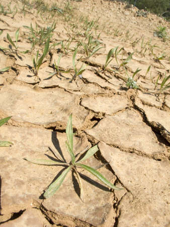 demarcation: drought land in the fields of catalonia