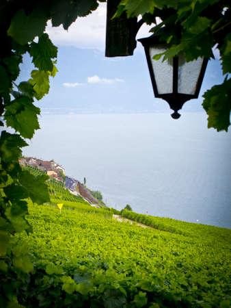 gradas: Terrazas de vi�edos en la Lavaux, Vaud, Suiza, Europa