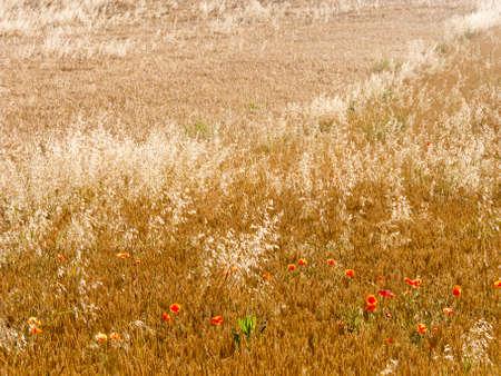 navarre: Landscape in Navarre, Spain