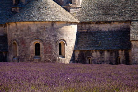 Blooming field of Lavender (Lavandula angustifolia) in front of Senanque Abbey, Gordes, Vaucluse, Provence-Alpes-Cote d'Azur, Southern France, France, Europe Stock Photo - 16936287