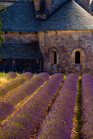 Blooming field of Lavender (Lavandula angustifolia) in front of Senanque Abbey, Gordes, Vaucluse, Provence-Alpes-Cote d'Azur, Southern France, France, Europe Stock Photo - 16936290