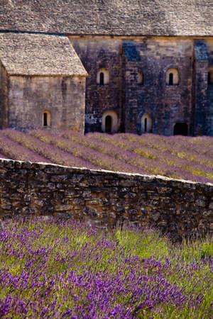 Blooming field of Lavender (Lavandula angustifolia) in front of Senanque Abbey, Gordes, Vaucluse, Provence-Alpes-Cote d'Azur, Southern France, France, Europe Stock Photo - 16936329