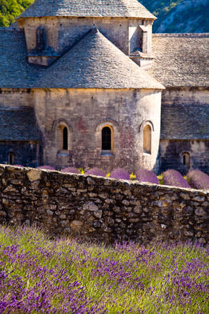 faboideae: Blooming field of Lavender (Lavandula angustifolia) in front of Senanque Abbey, Gordes, Vaucluse, Provence-Alpes-Cote dAzur, Southern France, France, Europe