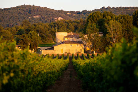 the luberon: Vineyards around Lacoste and Bonnieux villages, Luberon, Provence, France