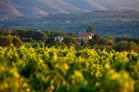 luberon: Vineyards around Lacoste and Bonnieux villages, Luberon, Provence, France