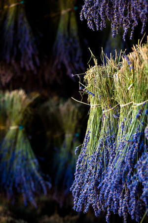 Blooming field of Lavender (Lavandula angustifolia), Vaucluse, Provence-Alpes-Cote d'Azur, Southern France, France, Europe, PublicGround Stock Photo - 16939648
