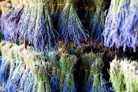 lavandula angustifolia: Blooming field of Lavender (Lavandula angustifolia), Vaucluse, Provence-Alpes-Cote dAzur, Southern France, France, Europe, PublicGround