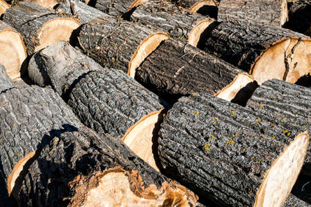 Logging. Tree trunks ready for transport. Andalusia, Spain photo