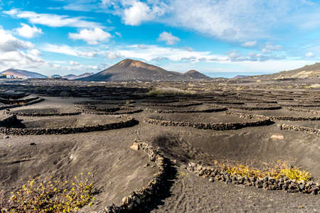 Vineyards in the Geria in Lanzarote, Canary Islands, Spain Stock Photo
