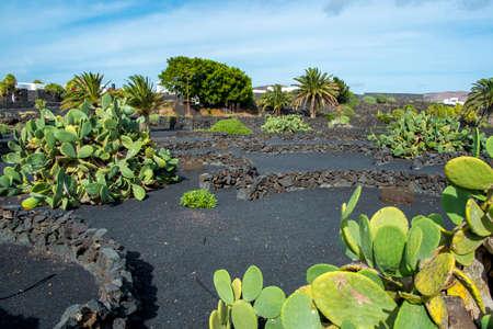 lanzarote: Garden cactus in Lanzarote, Canary Islands, Spain