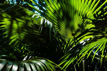 Tropical garden detail in Salvador de Bahia Brazil