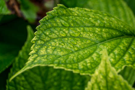 uncomplicated: Close up of water droplets on leaf