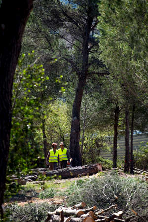 industrious: Sant Cugat del Valles, Barcelona, Spain - April 3, 2017:  A forest is being felled to build on green areas.