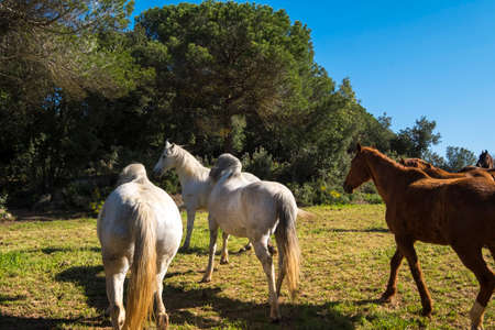 Catalonia, Spain - April 13, 2017:  Horses in freedom in a rural area of ​​the Valles Oriental