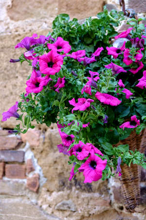 pienza: Decoration with plants and flowers in Pienza Tuscany Italy
