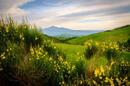pienza: Scenery near to Pienza, Tuscany. The area is part of the Val dOrcia Italy Europe Stock Photo