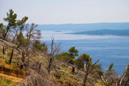 Deforestation in the Dalmatian coast in Croatia Europe