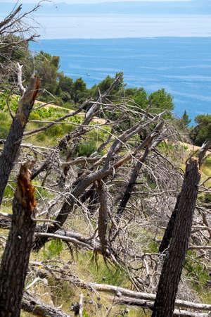 Deforestation in the Dalmatian coast in Croatia Europe