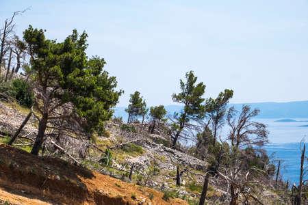 deforested: Deforestation in the Dalmatian coast in Croatia Europe
