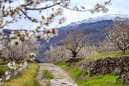 Strada di campagna nella Valle del Jerte Valley in Extremadura in Spagna