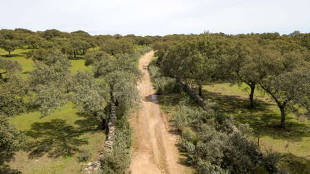 Aerial view of the dehesa in the province of Caceres in Extremadura Spain 写真素材