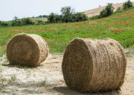 hayroll: Hay bales on the field after harvest