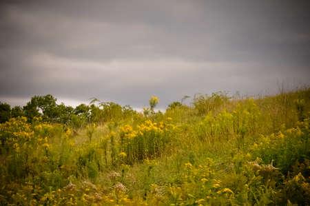 grassy knoll: grass