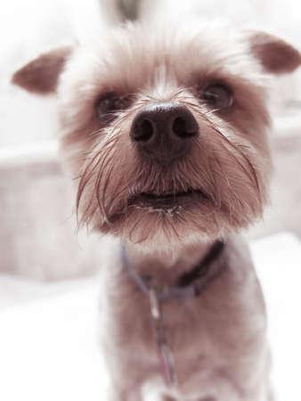 nosey: dog