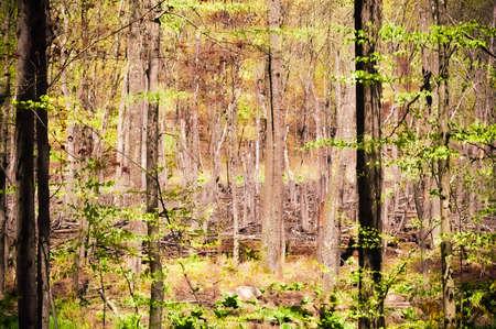 woods Reklamní fotografie