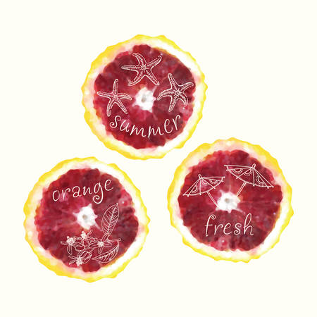 orange slices: Vector watercolor orange slices and hand drawn doodle elements. Hand painted circles collection.