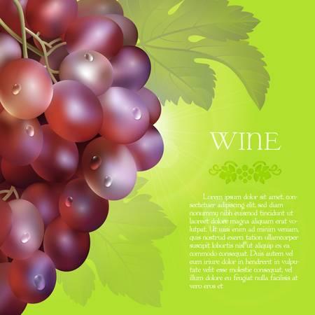 vector racimo de las uvas rojas frescas con las hojas verdes y las gotas de rocío sobre un fondo verde .