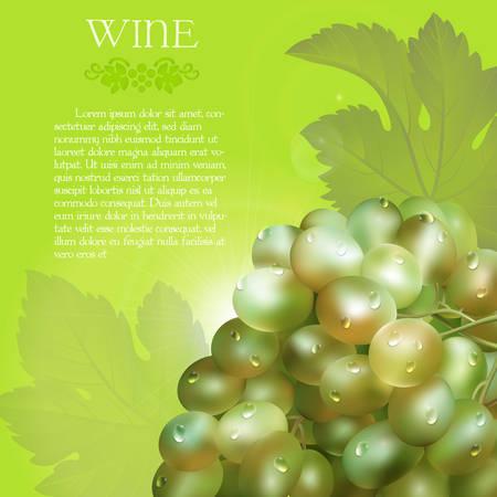 vector racimo de las uvas verdes frescas con las hojas verdes y las gotas de rocío sobre un fondo verde con destellos de uva brillo y el espacio de texto de citas