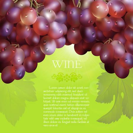 Vector racimo de las uvas rojas frescas con las hojas verdes y las gotas de rocío sobre un fondo verde con resplandor, uva y texto de marcador de posición