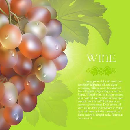 Vector bunch of the fresh pink grapes with the green leaves and the dew droplets on a green background with glow flare, grape logo and placeholder text