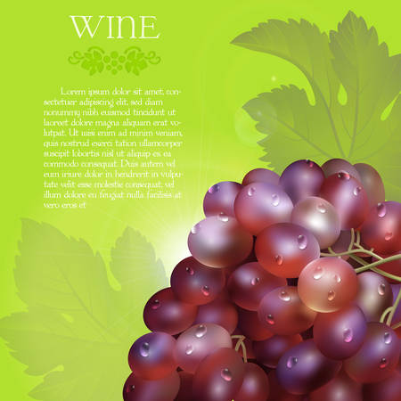 Vector bunch of the fresh red grapes with the green leaves and the dew droplets on a green background with glow flare, grape logo and placeholder text