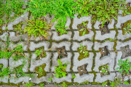Wild grass sprouts between concrete tiles of old eco-friendly urban paved sidewalk for parking. Cement tiles of complex geometric shape at intervals for grass